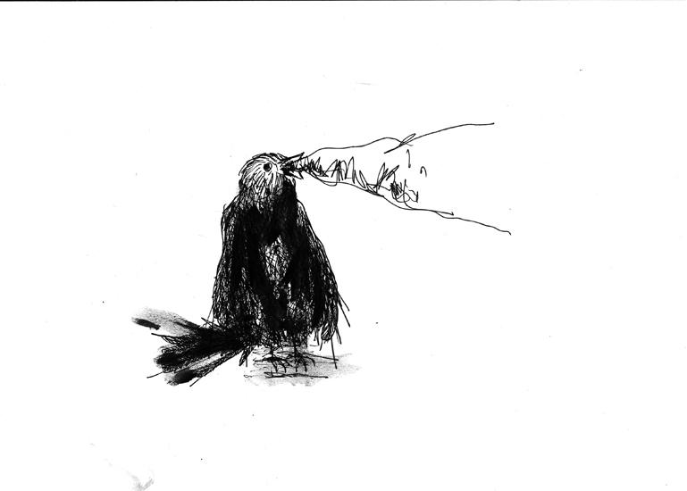 http://www.julienserve.com/files/gimgs/61_ofr-oiseau-11.jpg