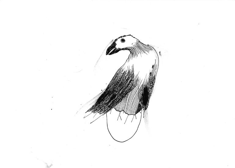 http://www.julienserve.com/files/gimgs/61_ofr-oiseau-13.jpg