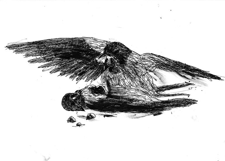 http://www.julienserve.com/files/gimgs/61_ofr-oiseau-26.jpg