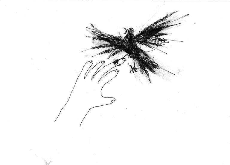 http://www.julienserve.com/files/gimgs/61_ofr-oiseau-3.jpg