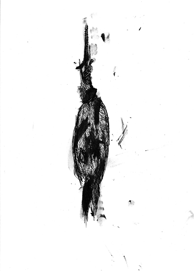 http://www.julienserve.com/files/gimgs/61_ofr-oiseau-48.jpg