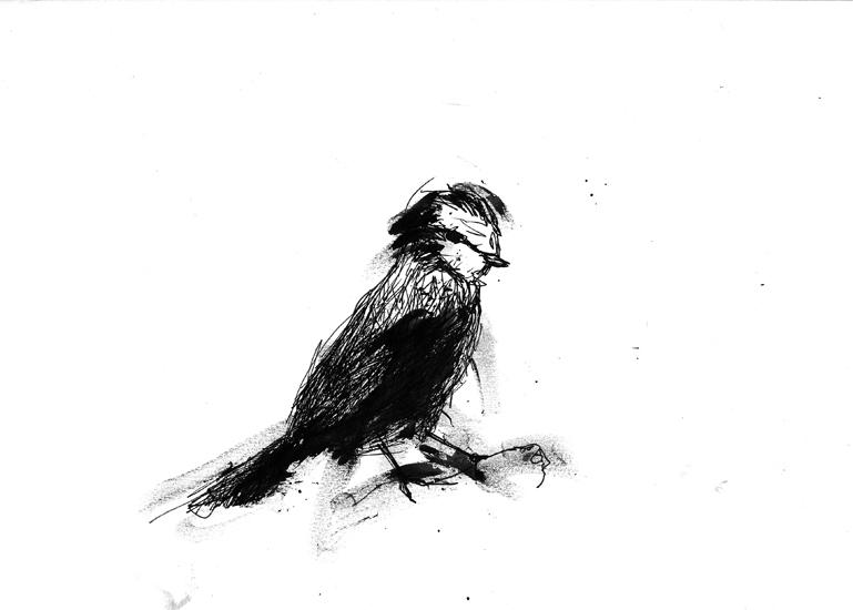 http://www.julienserve.com/files/gimgs/61_ofr-oiseau-49.jpg