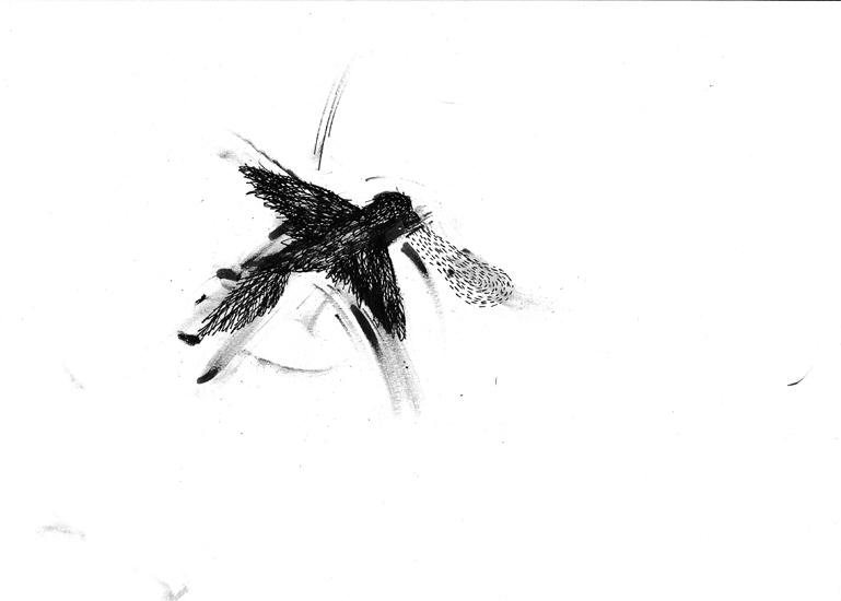 http://www.julienserve.com/files/gimgs/61_ofr-oiseau-50.jpg