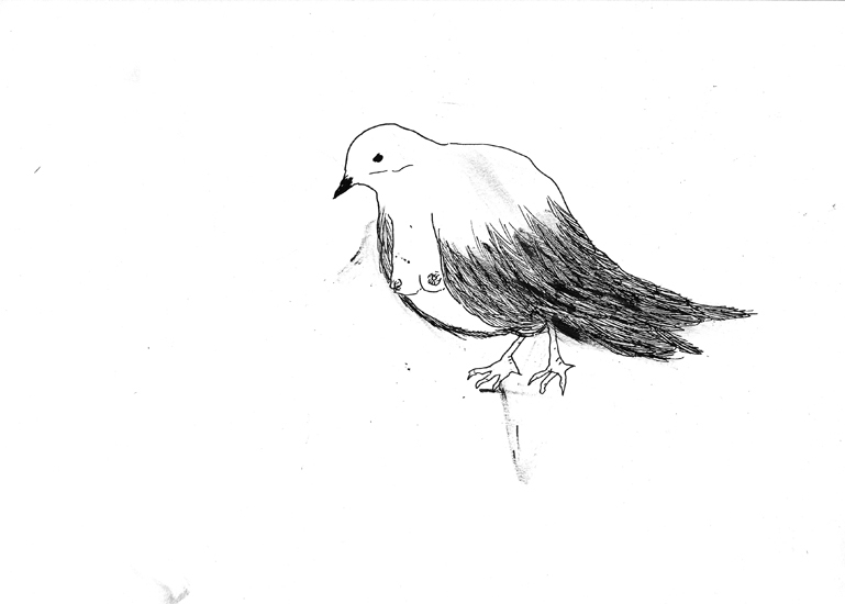 http://www.julienserve.com/files/gimgs/61_ofr-oiseau-53.jpg