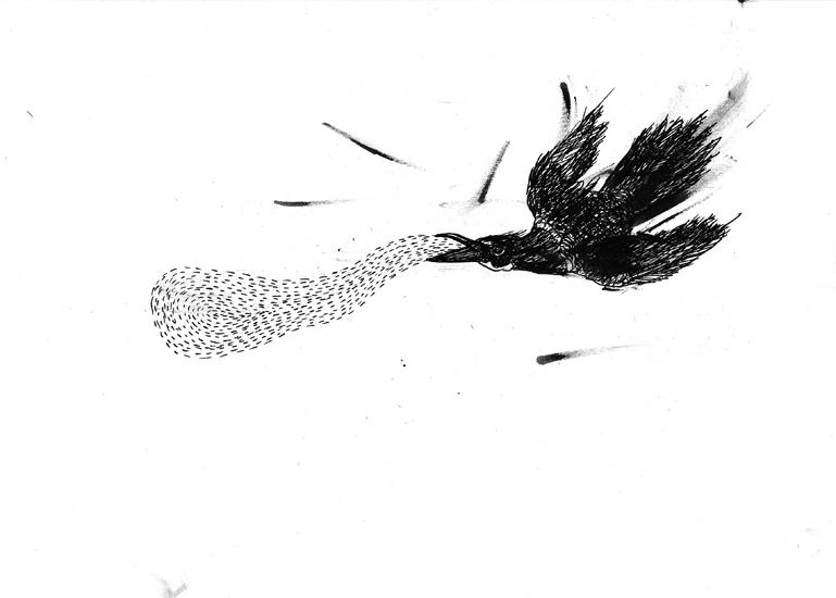 http://www.julienserve.com/files/gimgs/61_ofr-oiseau-54.jpg