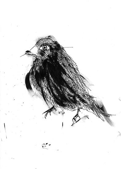 http://www.julienserve.com/files/gimgs/61_ofr-oiseau-56.jpg