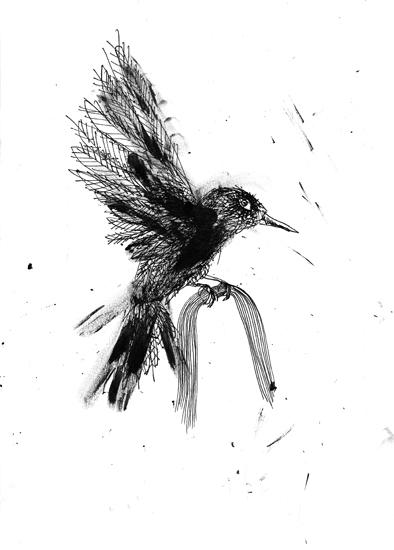 http://www.julienserve.com/files/gimgs/61_ofr-oiseau-58.jpg