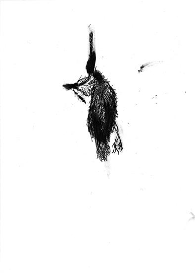 http://www.julienserve.com/files/gimgs/61_ofr-oiseau-59.jpg