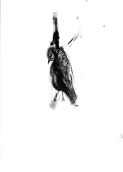 http://www.julienserve.com/files/gimgs/61_ofr-oiseau-61.jpg