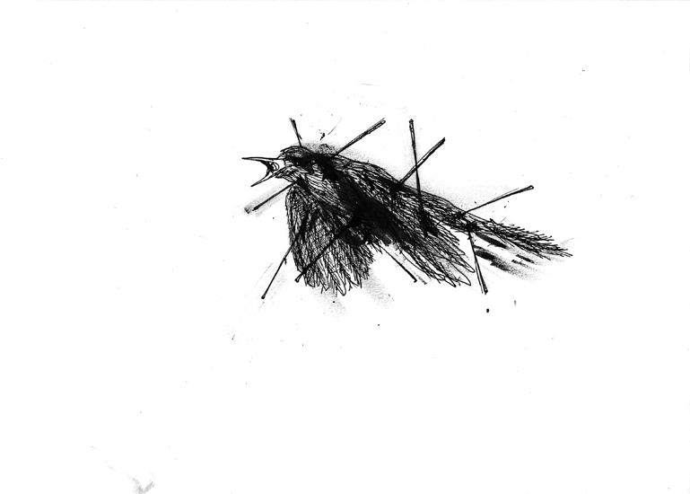 http://www.julienserve.com/files/gimgs/61_ofr-oiseau-7.jpg