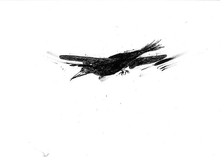 http://www.julienserve.com/files/gimgs/61_ofr-oiseau-8.jpg