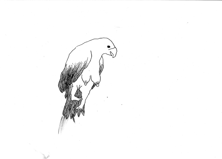 http://www.julienserve.com/files/gimgs/61_ofr-oiseau-9.jpg