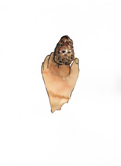 http://www.julienserve.com/files/gimgs/97_morchella-hand-1.jpg
