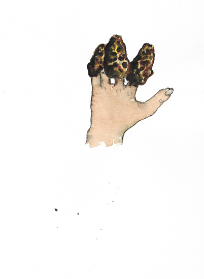 http://www.julienserve.com/files/gimgs/97_morchella-hand-2.jpg